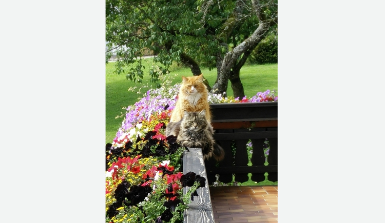 Blick auf den Balkon mit Blumen; sitzende Katzen