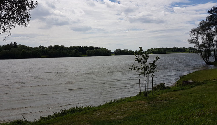Au an der Donau. (© Oberösterreich Tourismus GmbH/Irene Tauber)