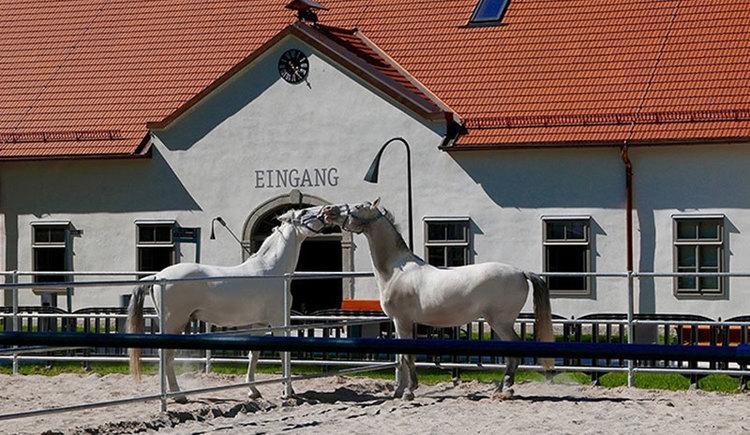 Pferdezentrum Stadl-Paura
