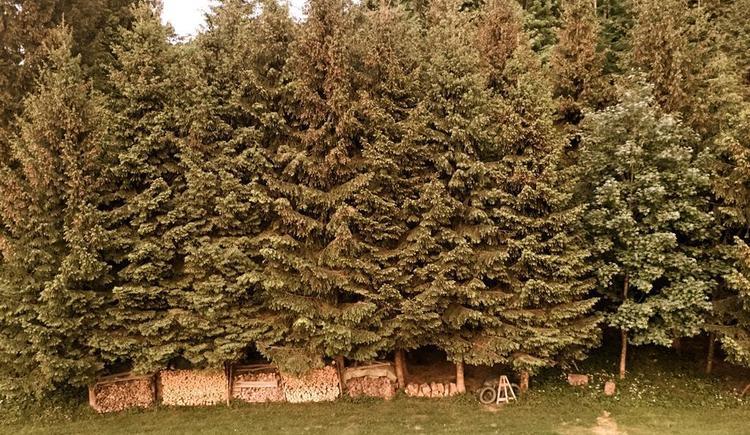 Hinter dem Haus - Spielwiese und Wald