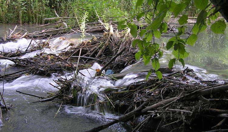 Biberstau, Stillensteinklamm. (© Naturschutzabteilung, Amt der OÖ Landesregierung)