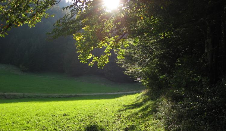 Wanderweg Plaik (© Tourismusverband Faistenau)