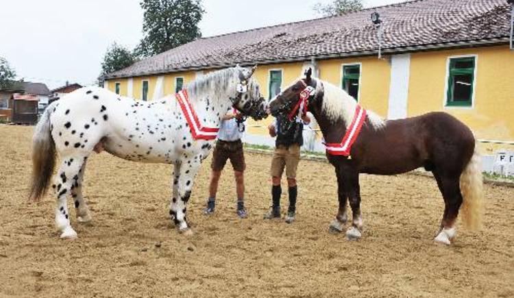 Pferdezentrum.jpg