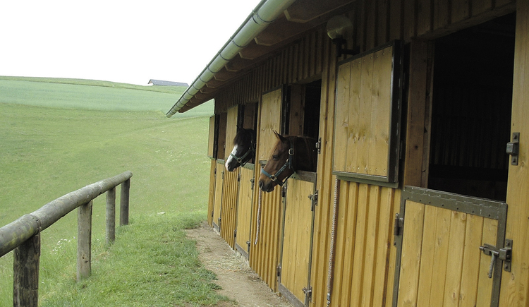 Pferdeherberge Haunschmid