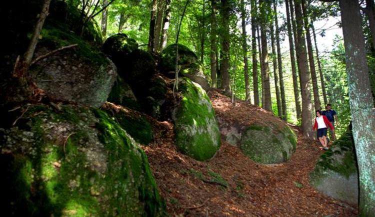 Wandern am Panoramablickweg Haiderberg