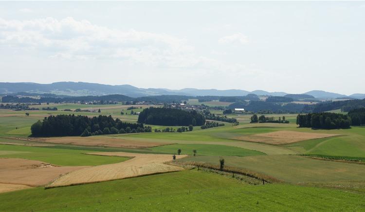 Radfahren im Granithochland nördlich von Freistadt (© Tourismusverband Mühlviertler Kernland)