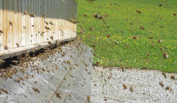 Natur pur - Imkerhäuschen beim Oberhinteregghof (© Erlebnisbauernhof Oberhinteregg Faistenau)