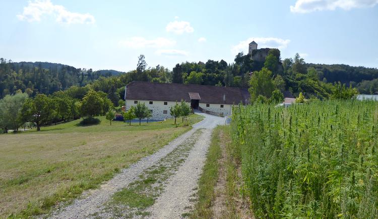 Blick auf das Schloss Riedegg (© Tanja Mittermair)