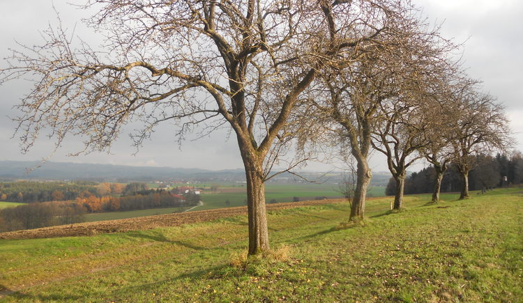 Feichtberg-Blick 006.jpg
