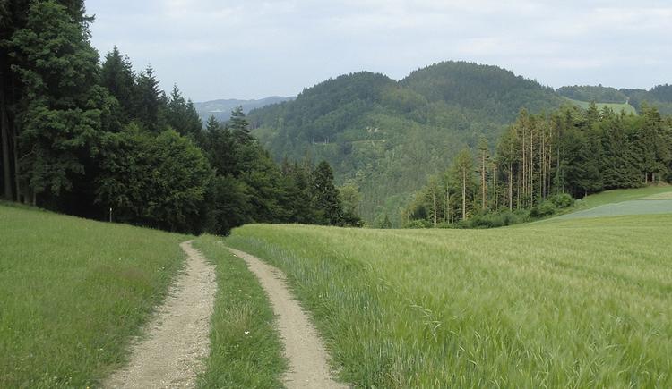 Über dem Waldaisttal
