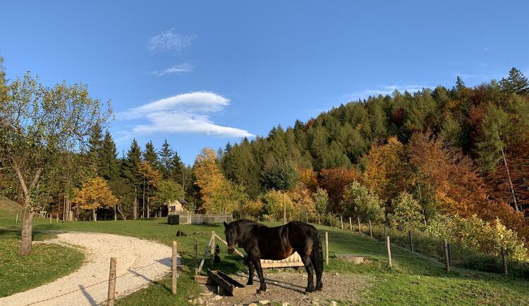 Pferd Nora
