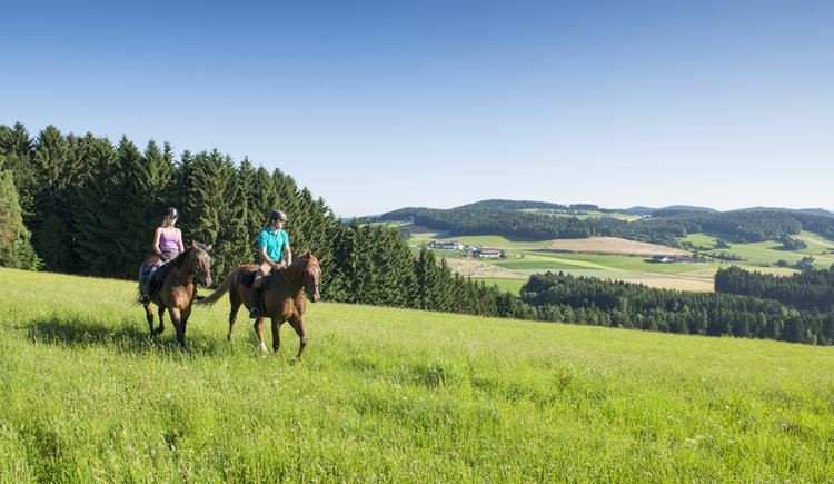 Reiten (© OÖ Tourismus/Erber)