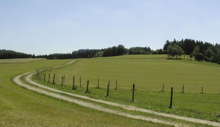 Naturweg zum Holzkreuz
