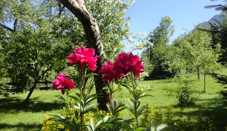 The large garden with many flowers and fruit trees invites you to relax