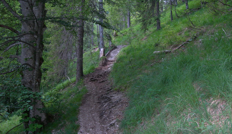 Downhill zum Offensee (© Oberösterreich Tourismus / green-solutions)