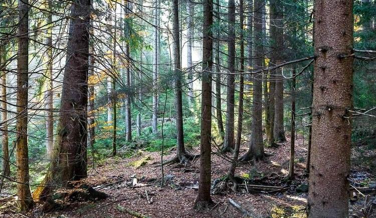 Waldboden. (© Thomas Reibnegger)