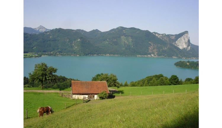 Blick von der Wiese auf ein Pferd, Scheune, Wälder, im Hintergrund der See und die Berge
