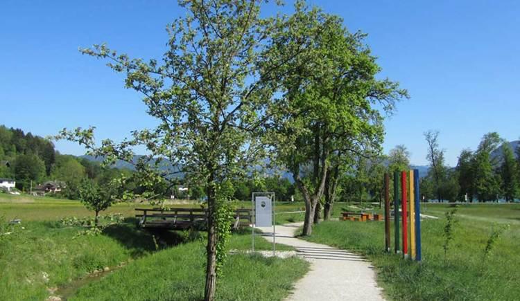 der Kneippweg führt vorbei an Wiesen und einem Schmalen Bach, auf der Seite steht ein Baum