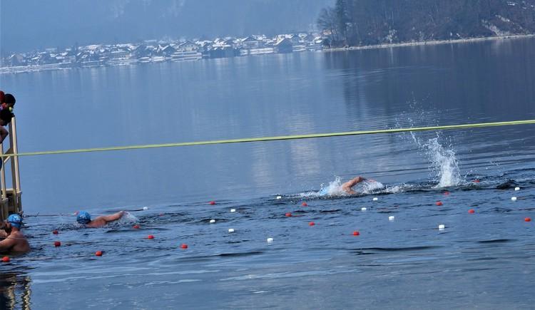 Bereits zum 2. Mal findet der Ice Swimming Marathon im Strandbad Obertraun statt.