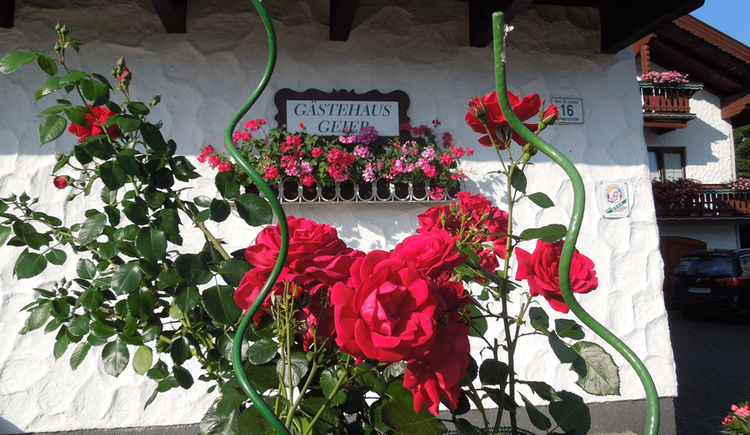 look at the house sign from the guest house Geier, in the foreground are roses