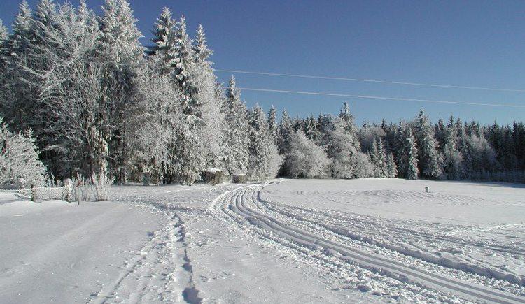 Bestens präparierte Loipen im Nordischen Zentrum Böhmerwald. Skating- und Parallelspur.