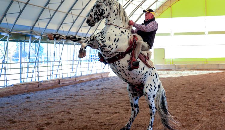 Pferde, Ponys, Natur, Horse Training Center Hellmayr, HTC Hellmayr, Horse Leadership, Freizeit. (© Gerhard Gegenleitner)