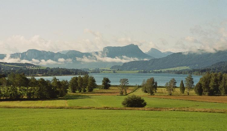 Blick auf die Landschaft, im Hintergrund der See und die Berge. (© Tourismusverband MondSeeLand)