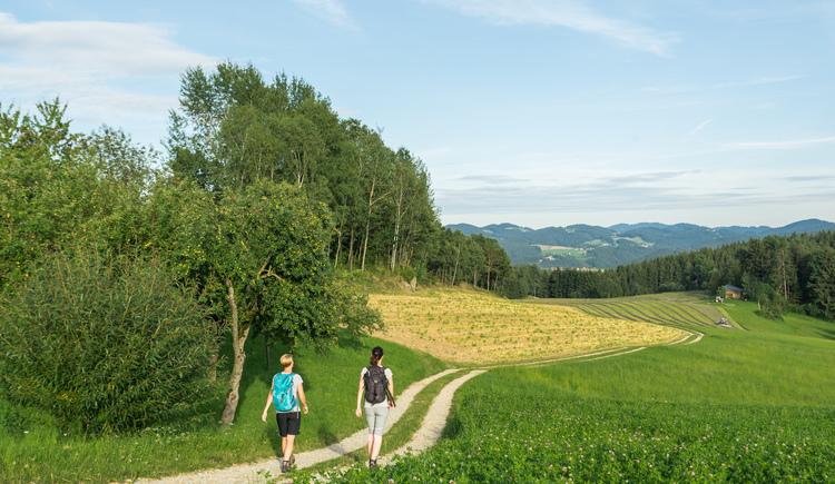 Wandern am Alm-Granitweg (© Mühlviertler Alm Hawlan)