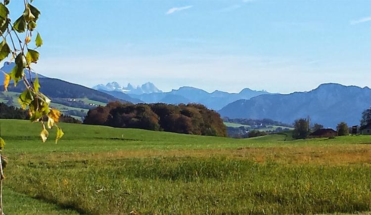 Blick auf die Landschaft, im Hintergrund die Berge. (© Tourismusverband MondSeeLand)