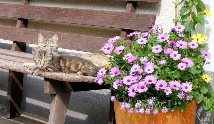 Auch die Katzen geniessen die Ruhe am Ferienhof