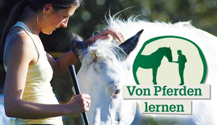 Von Pferdenen lernen (© Reit-Erlebnis-Akademie Mühlviertler Kernland)
