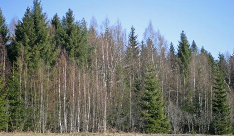 Moorbruchwald - Naturschutzgebiet