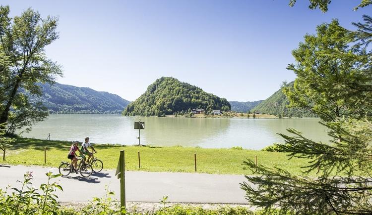 Donautal-Radroute für Rennradfahrer (© OÖ.Tourismus/Erber)