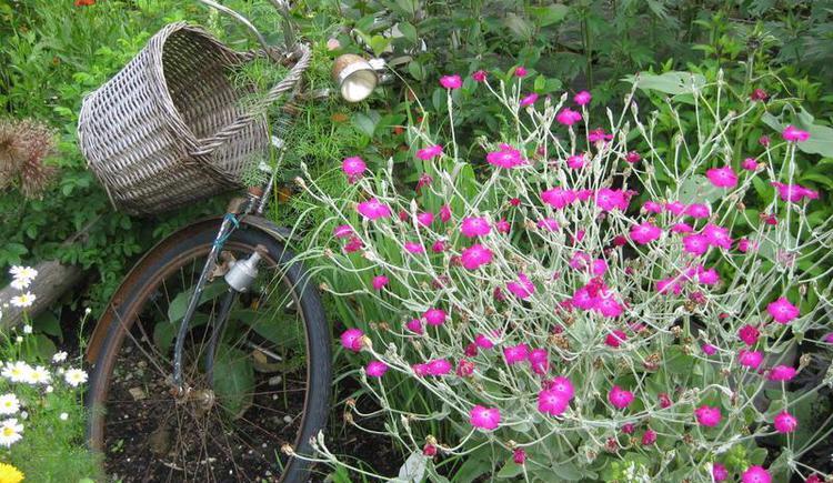 Was versteckt sich den hier im Kräutergarten? (© Erlebnisbauernhof Oberhinteregg Faistenau)