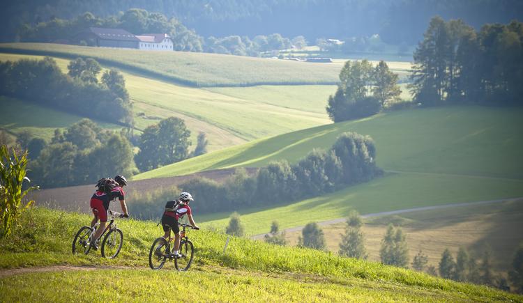 Mountainbiken im Mühlviertel. (© ©OÖ.Tourismus/Erber)