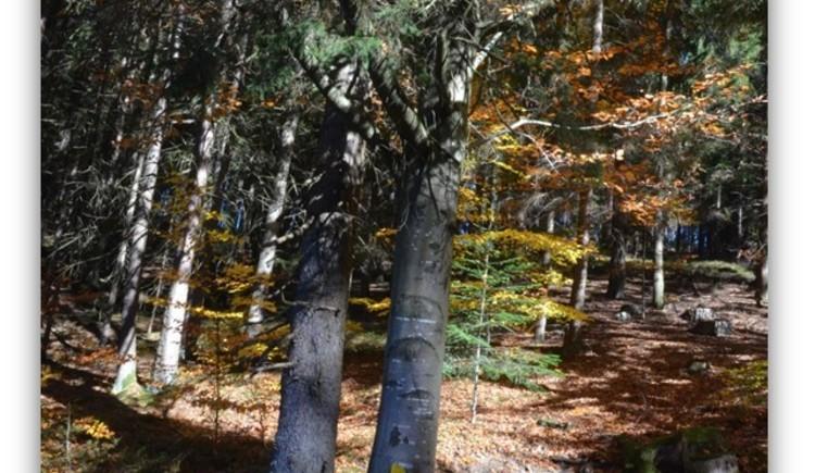 Laubbäume (© Wiederstein-Graser)