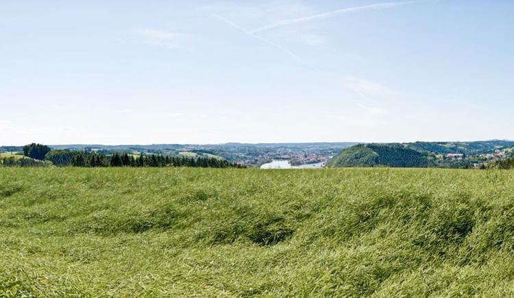 Freinberg (© WGD Donau Oberösterreich Tourismus GmbH/Weissenbrunner)