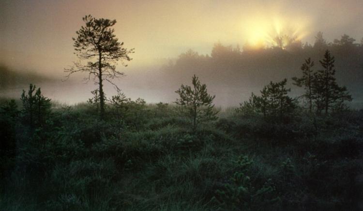 Moorlandschaft im Sonnenaufgang (© (© Marktgemeinde Liebenau))