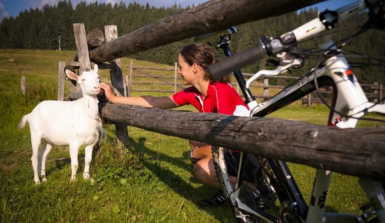 Mountainbiken in einer typisch ländlichen Idylle (© OÖ.Tourismus/Erber)