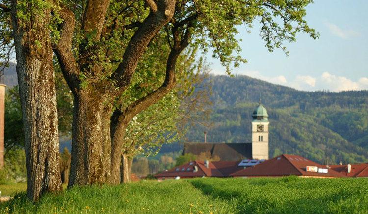 Radfahren und Wandern in Pettenbach im Almtal. (© Foto Ebner)