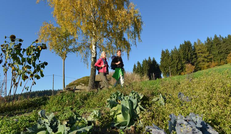 Wandern am Hoader-Steig