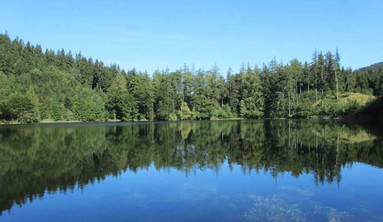 Blick auf einen See, im Hintergrund ein Wald