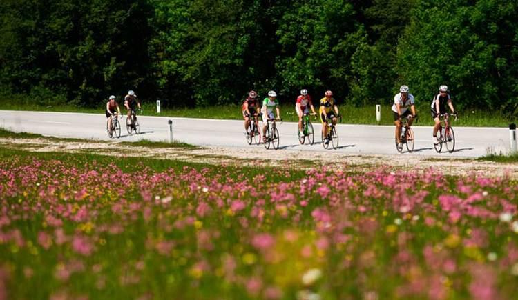 Blick auf einige Radfahrer, im Vordergrund eine Blumenwiese, im Hintergrund ein Wald. (© www.mondsee.at c Heiko Mandl)