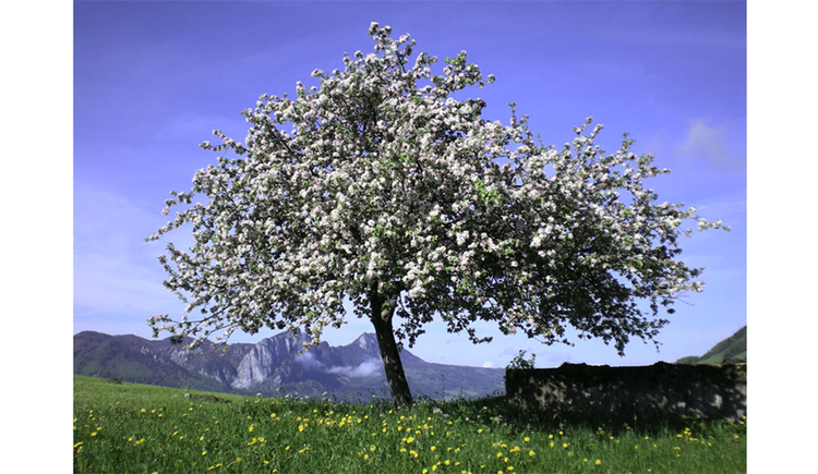 Flowering tree in the meadow