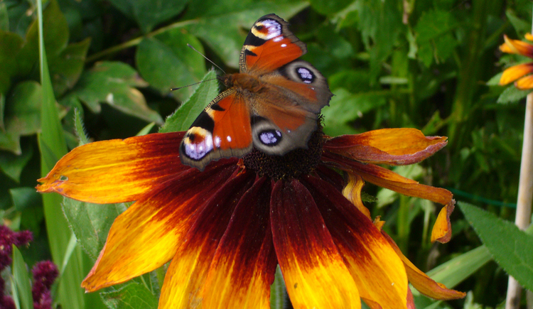 Butterfly sits on flower