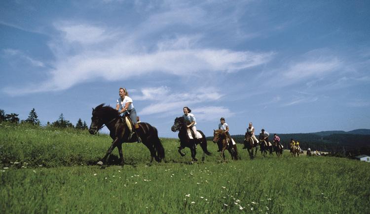 Reiten (© www.innviertel-tourismus.at)