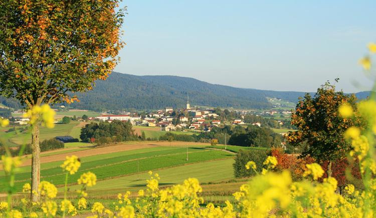 Auf der Torfaurunde in Ulrichsberg die einzigartige Naturvielfalt genießen. (© Ferienregion Böhmerwald)