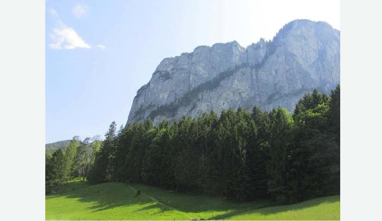 Blick von der Wiese auf den Wald und die Berge