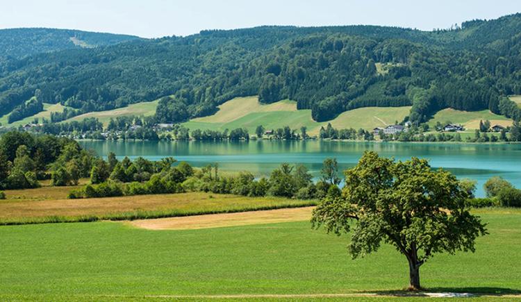 Landschaft, Bäume, im Hintergrund der See, Berge