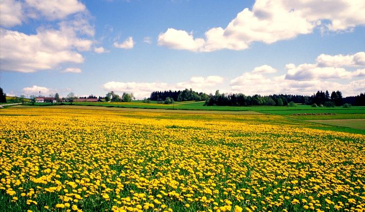 Frühling. (© Verband Mühlviertler Alm)